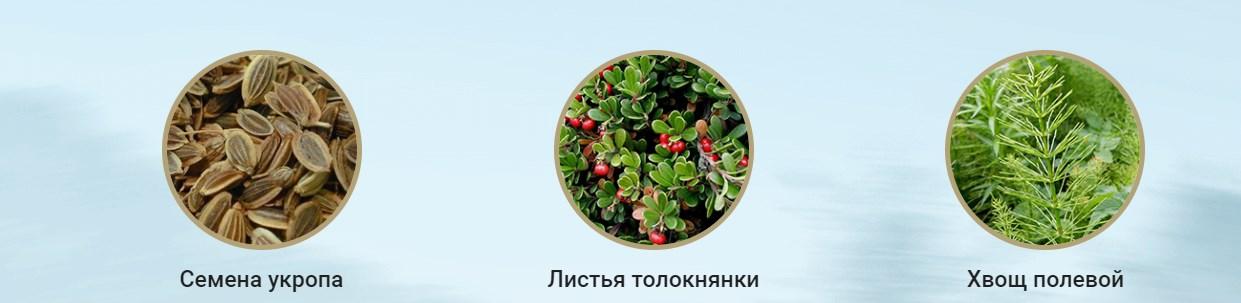 Состав уринари меридиан