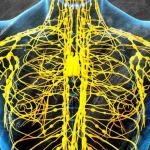 Нарушения лимфатической системы - как восстановить?